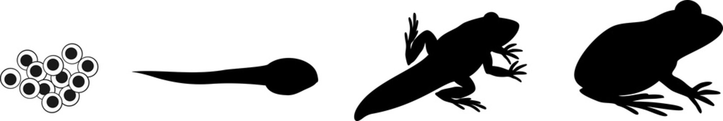Silhouettes of four stages of frog development