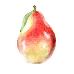 Watercolor juicy pear on a white background