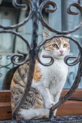 Hauskatze sitzt auf Fenstersims, hinter Gitter