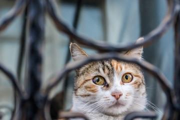 Hauskatze mit Kopf hinter Gitter auf Fenstersims