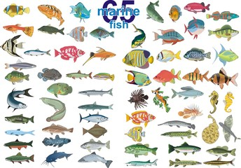 Set - marine fishes. In vector form on a transparent background