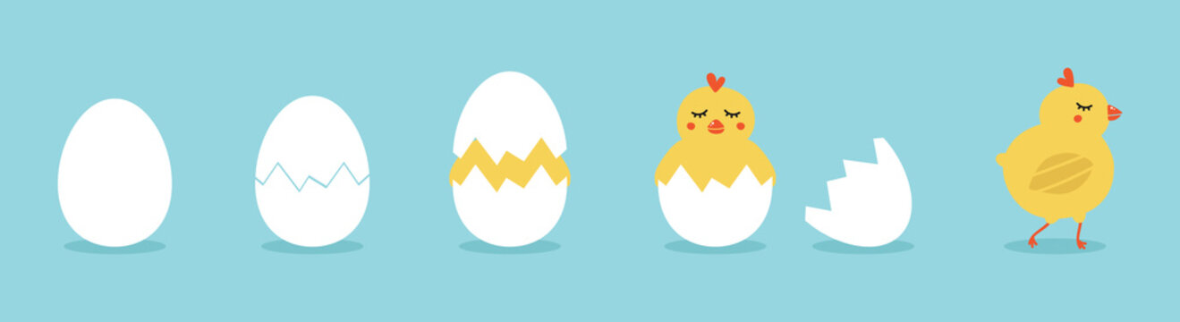 Cute vector cartoon illustration of step-by-step process baby chicken hatching from the egg. Funny and educational illustration for kids.