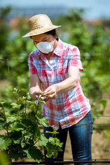 Middle age woman,work in her vineyard
