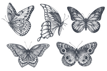 Set of beautiful hand drawn butterflies