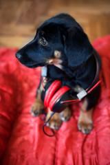 black dog portrait