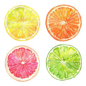 Grapefruit, orange, lemon, lime slices watercolor illustration set on an isolated background