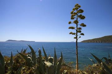 Coastline near Komiza and Bisevo island