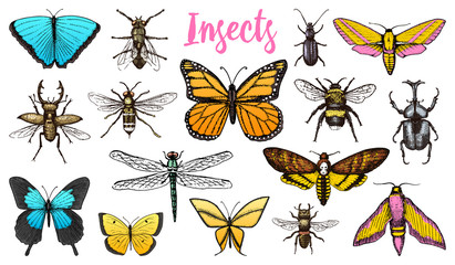 Different insects set. Butterfly and dragonfly, bug and pet bee. Mystical symbol of freedom. entomological collection. engraved hand drawn in old sketch vintage style. t-shirt or scrapbooking design.