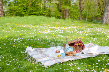 Aluminium Prints Picnic Picnic in the park. A green meadow with flowers, a plaid and a bottle of wine. Romantic dinner in nature. Free space for text. Spring in the Netherlands