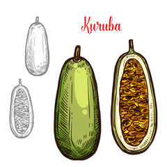 Kuruba vector sketch fruit cut icon