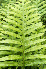 Tropical green leaves on background, nature summer forest plant concept