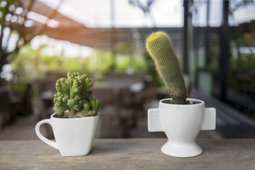 Close up cactus, coffee shop background.