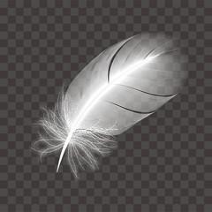 鳥の白い羽根