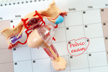 Woman or women wellness, pelvic exam and gynecological or ob-gyn appointment concept with a medical model of the female reproductive system on top of a calendar with text circled in red - pelvic exam