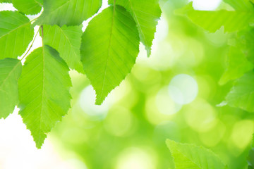 新緑の葉と木漏れ日