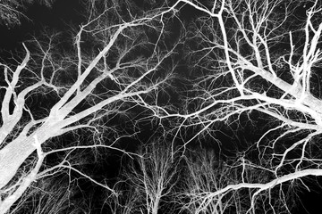 Bare trees in the winter, negative.