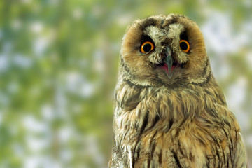 Closeup portrait of a funny owl looking directly into the camera.