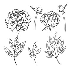 vector contour peony rose flowers bud leaf coloring book