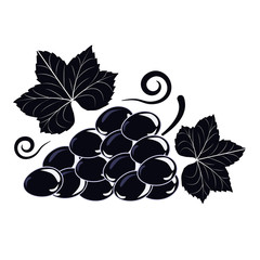 Vector illustration symbol of a Vine with black grapes and leaves on white isolated background.