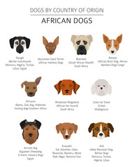Dogs by country of origin. African dog breeds. Infographic template