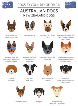 Dogs by country of origin. Australian dog breeds, New Zealand dogs. Infographic template