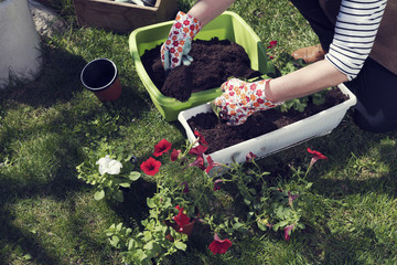 Womans hand adding soil in a pot Planting flowers