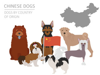 Dogs by country of origin. Chinese dog breeds. Infographic template