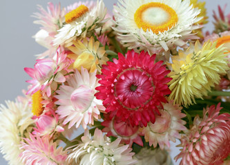 Dryed natural colorful flowers, suitable for transport around the world