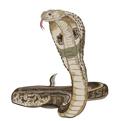 Snake of the cobra. Style of oriental tattoo. Vector.