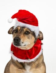 Doggy christmas portrait