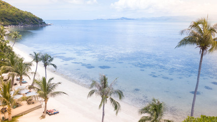 Palm tree,sea and  sand beach coast line