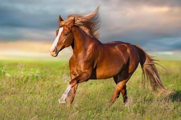 Red horse run in green meadow