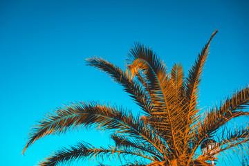 orange palm leafs in warm sunlight