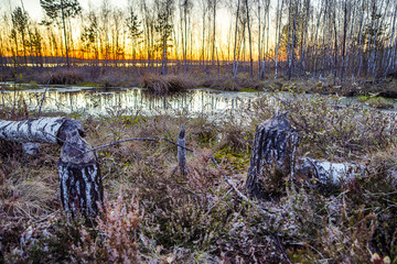 Picturesque view of the East European spring bog at twilight.