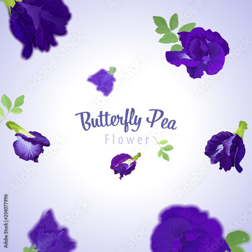 Butterfly Pea Flowers And Leaf On Blue Background Template Vector