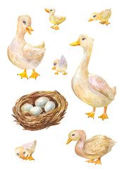 Watercolor set of geese. Illustration of cute village's birds