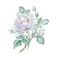 Watercolor White Rose Branch