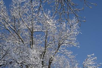 Kentucky Winter Trees 115