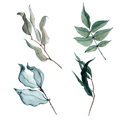 Watercolor greenery with different elements leaves and twigs.