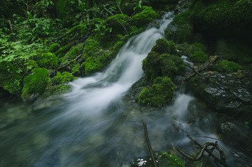 natural forest spring with fresh water