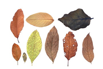 top view group of isolated colorful dry and fresh leaves and many shapes on white background