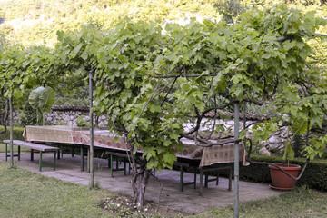 treille de vigne, monastère Saint Nicolas du Kablar, Serbie