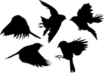set of five black flying tits on white