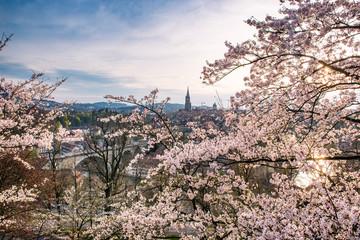 Abendstimmung über Berner Altstadt während der Kirschblüte