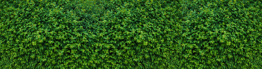 Panorama with leaves. Decorative wall with green leaves.
