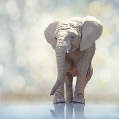 Young elephant painting