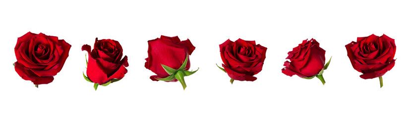 Set of six beautiful red rose flowerheads with sepals isolated on white background.