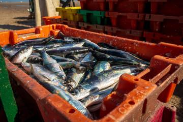 Fischfang, Kiste mit Heringen