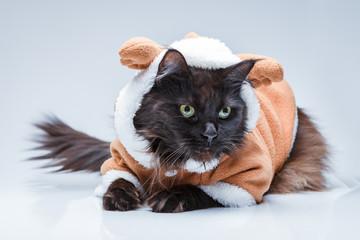 Photo of black cat in deer suit