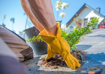 Men Planting Garden Plants
